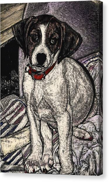 Trudy May The Puppy Canvas Print by Robert Goudreau