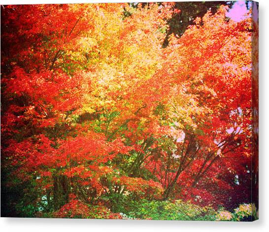 True Colors Canvas Print by Lee Yang