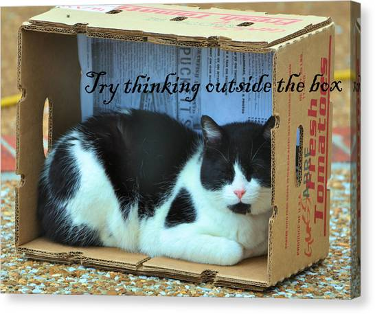 Manx Cats Canvas Print - Try Thinking Outside The Box by Jan Amiss Photography