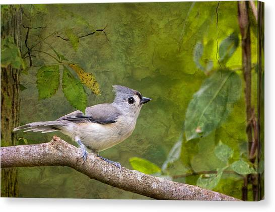 Tufted Titmouse In The Forest Canvas Print by Bonnie Barry