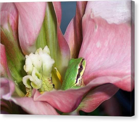 Tulip Frog Canvas Print