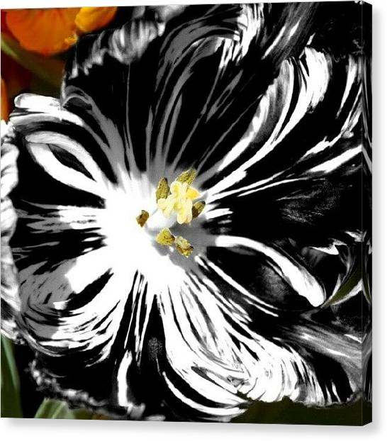 Pretty Canvas Print - Tulip Goes Wild by James Granberry