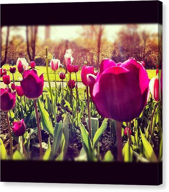 Tulips Canvas Print - Tulips In The Park - #flowers #tulip by Liza Mae | Luxavision