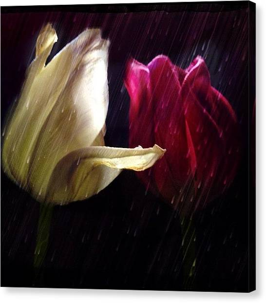Tulips Canvas Print - Tulips In The Rain by Paul Cutright
