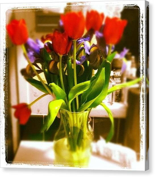 Irises Canvas Print - #tulips #irises  #colorsplash by Shaunta Heilman