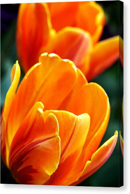 Tulips On Fire Canvas Print