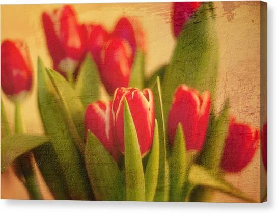 Tulips Canvas Print by Paul Davis