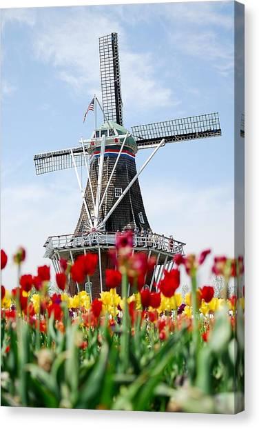 Tulips Windmill Canvas Print