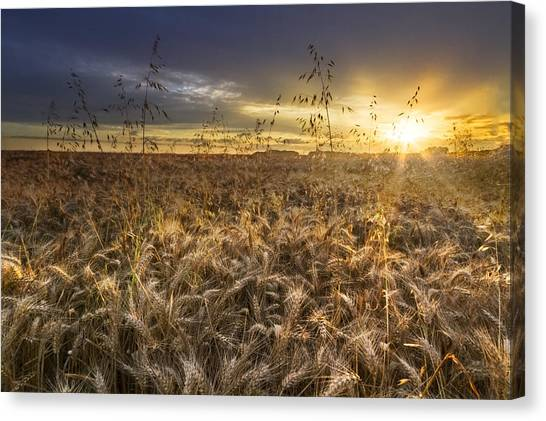 Thunderclouds Canvas Print - Tumble Wheat by Debra and Dave Vanderlaan