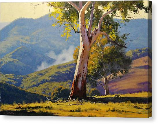 Koala Canvas Print - Turon Gum Tree by Graham Gercken