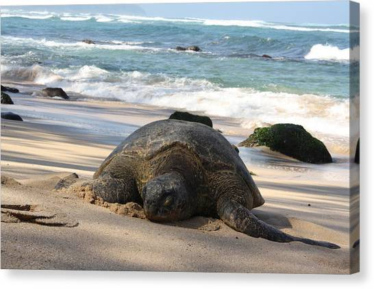 Turtle Beach Canvas Print by Natalija Wortman