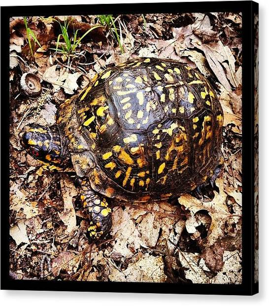 Tortoises Canvas Print - Turtle In The Hiking Trails At Hudson by Arnab Mukherjee