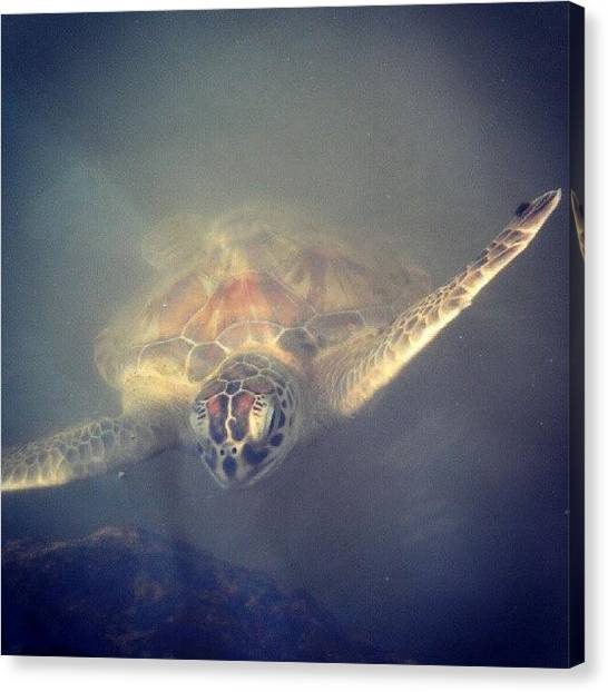 Sea Turtles Canvas Print - Turtle Of The Sea by Sarah Booth