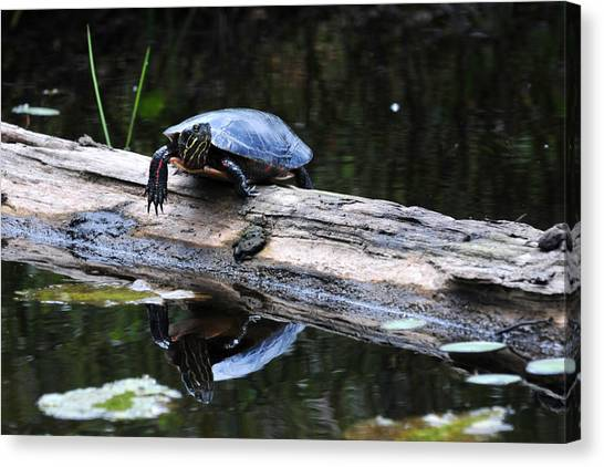 Turtle Reflected Canvas Print