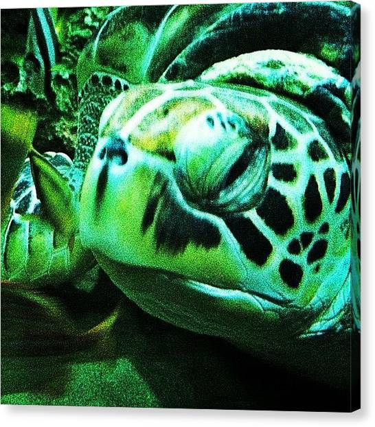 Sea Turtles Canvas Print - Tortoise by Farmosis Art Studio