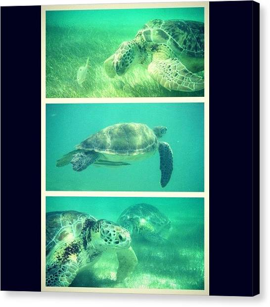 Sea Turtles Canvas Print - #turtles #sea #ocean #tropical by Marisag ☀✌