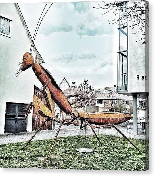 Storks Canvas Print - #twc_hunt @theweeklychallenge ➡ by Melanie Stork