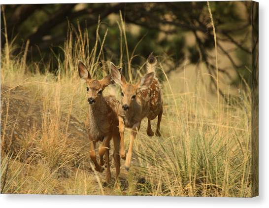 Canvas Print - Twins by Larry Robinson