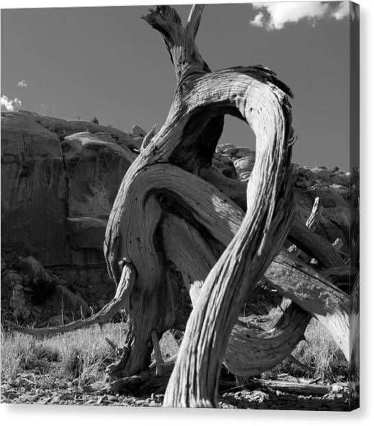 Twisted Root Canvas Print by Dale Davis