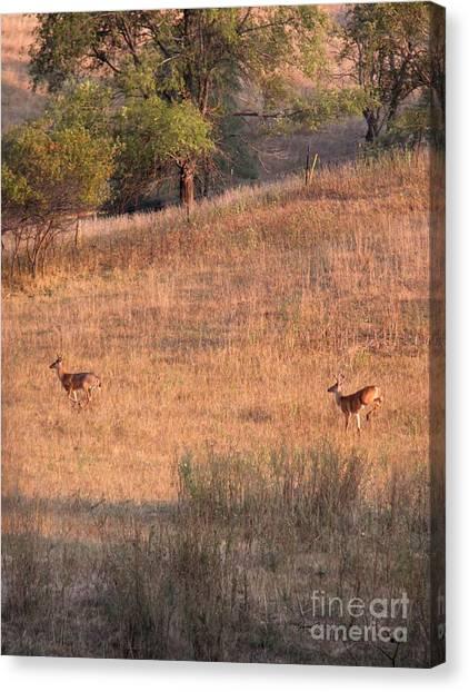 Two Bucks On The Run Canvas Print by Yumi Johnson