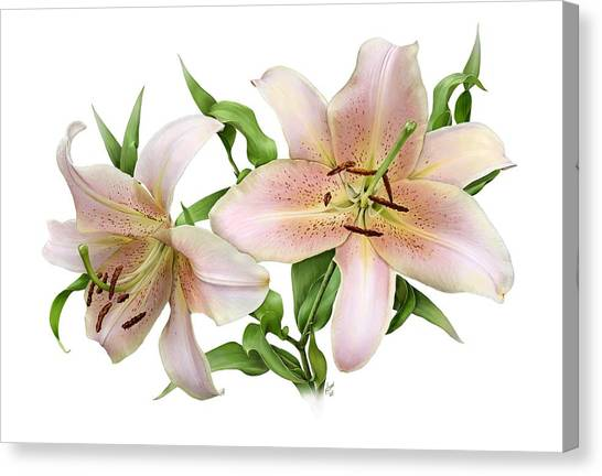 Two Lilies Canvas Print