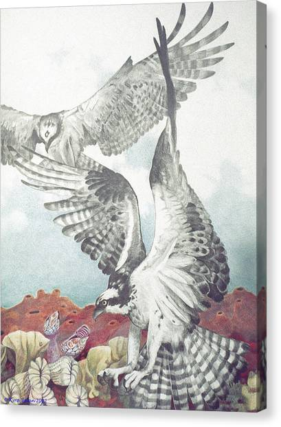 Two Ospreys Canvas Print