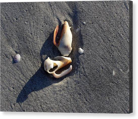 Two Shells On The Beach Canvas Print