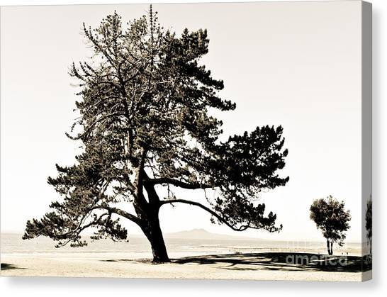 Two Trees On The Ocean Beach Canvas Print