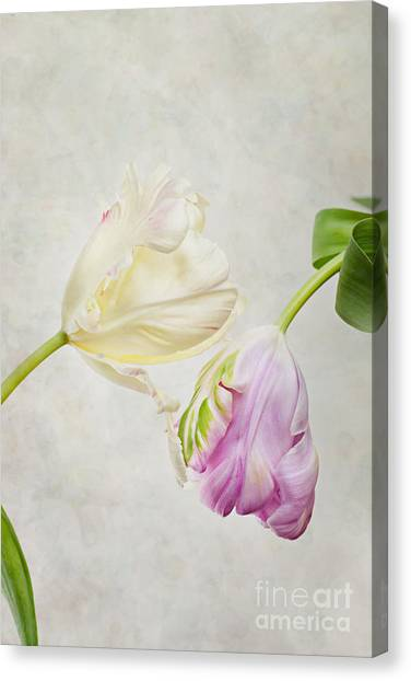Red Tulip Canvas Print - Two Tulips by Nailia Schwarz