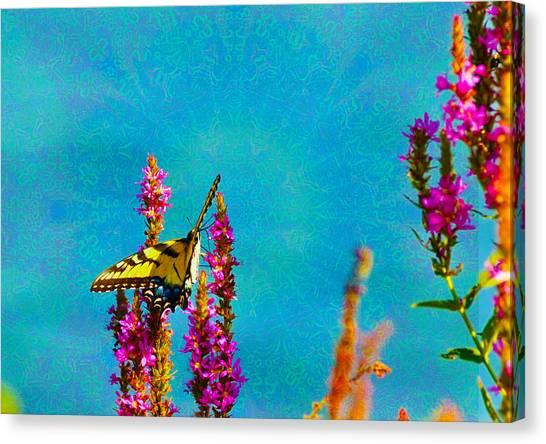Dye Canvas Print - Tye Dye Butterfly by Bill Cannon
