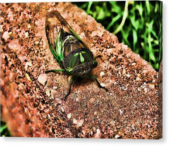 Ugh A Bug Canvas Print by Colleen Kammerer
