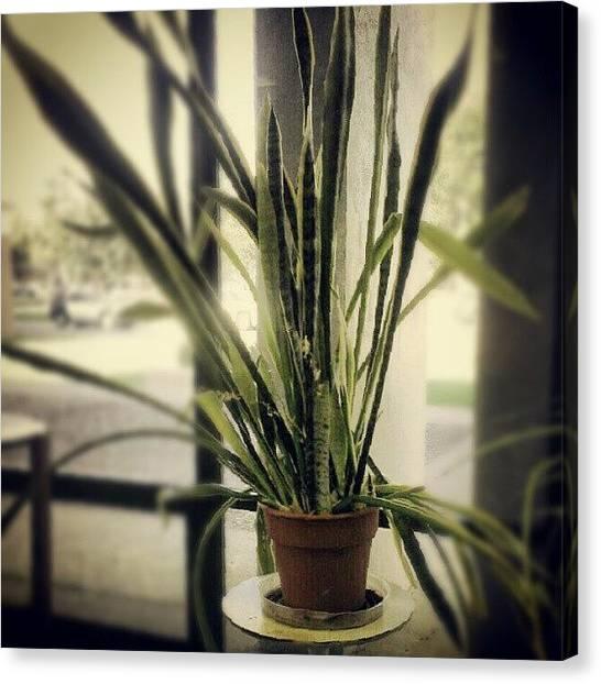 Libraries Canvas Print - #ugly #plant #edit #instagram by Dakotah Bond