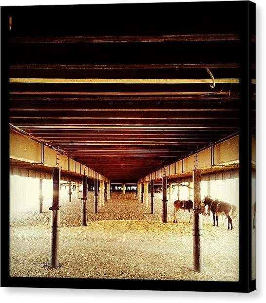 Donkeys Canvas Print - Under Britannia Pier #pier #donkey by Invisible Man