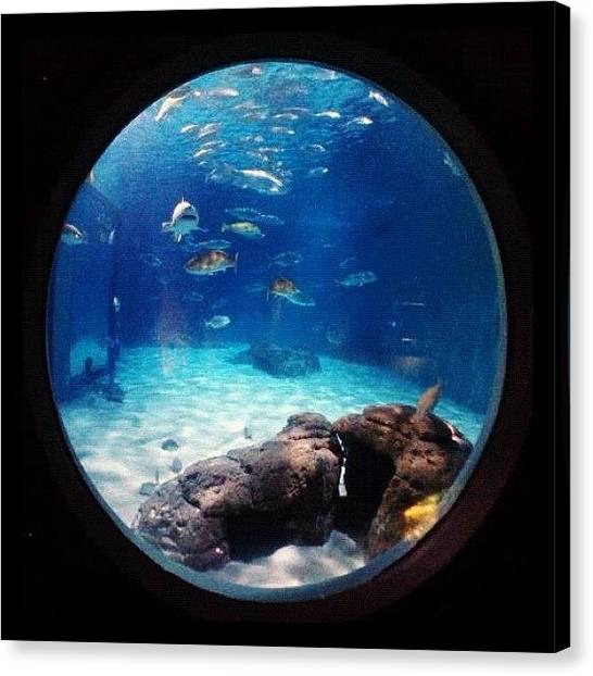Aquariums Canvas Print - Under The Sea ;) #instatrip #aquarium by Kika Verde