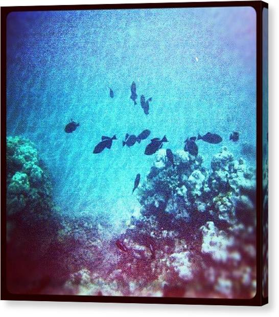 Reef Sharks Canvas Print - #underwater #latergram #fish #coral by Alexandra Cook