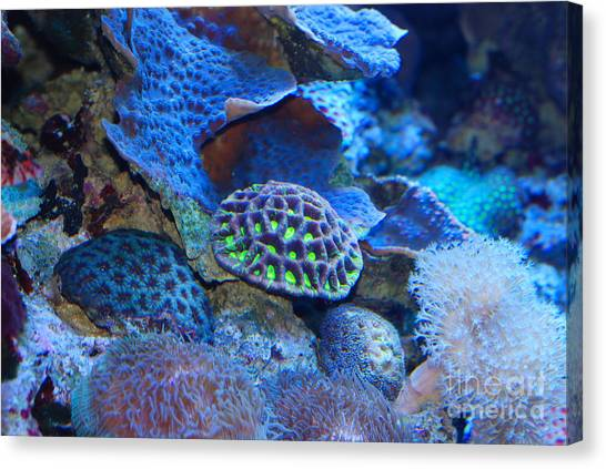 Underwater Paradise Canvas Print by Andrea Simon
