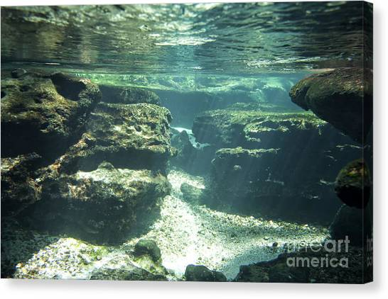 Underwater Stream In Central Florida Canvas Print by Christopher Purcell