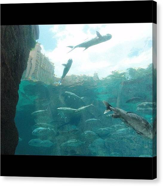 Tropical Fish Canvas Print - Underwater Tunnel In Atlantis. #beach by Anthony Sclafani