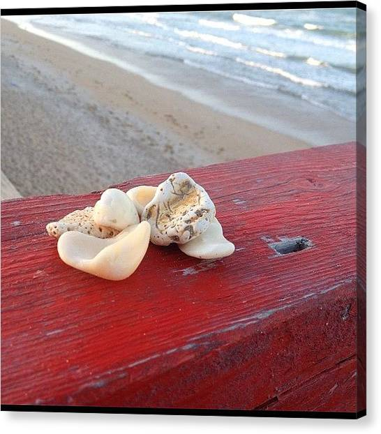 Seashells Canvas Print - #unedited #myphotography by Danny Alvarado