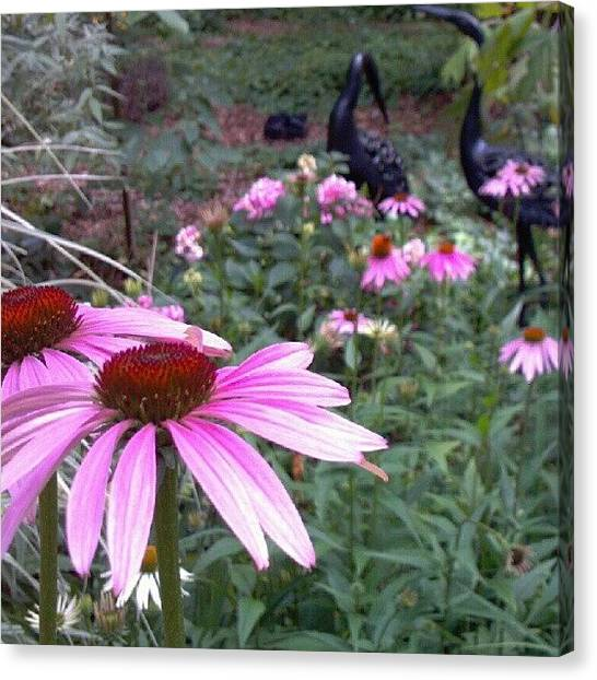 Droid Canvas Print - #unfiltered #pink #coneflower by Carla From Central Va  Usa