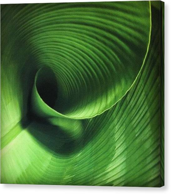 Spiral Canvas Print - Unfolding Leaf by Marce HH