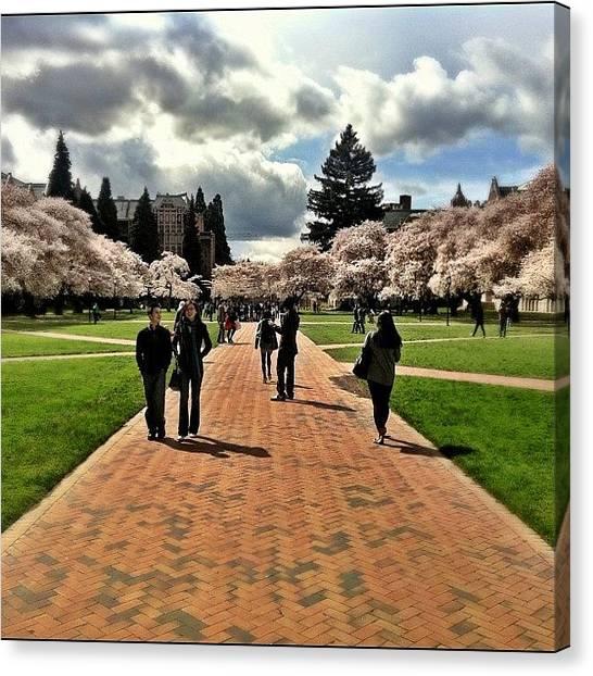 Huskies Canvas Print - University Of Washington by Chris Fabregas