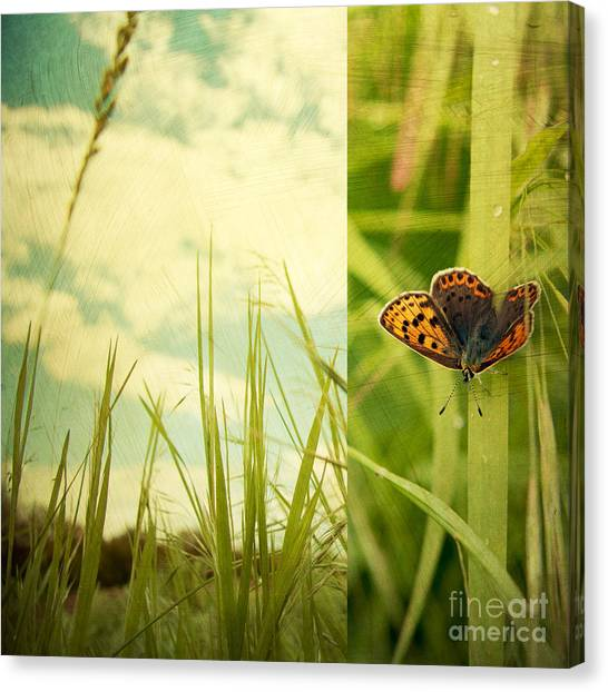 Insects Canvas Print - Unveil by Violet Gray