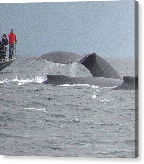 Whales Canvas Print - Up Close And Personal. Humpback Whale by Cynthia Post