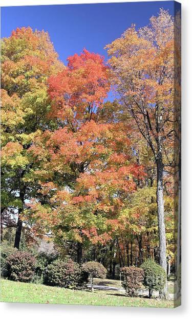 Upj Campus Autumn  Canvas Print