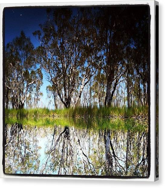 Wilderness Canvas Print - #upsidedown #uppernoosariver #cooloola by Tony Keim