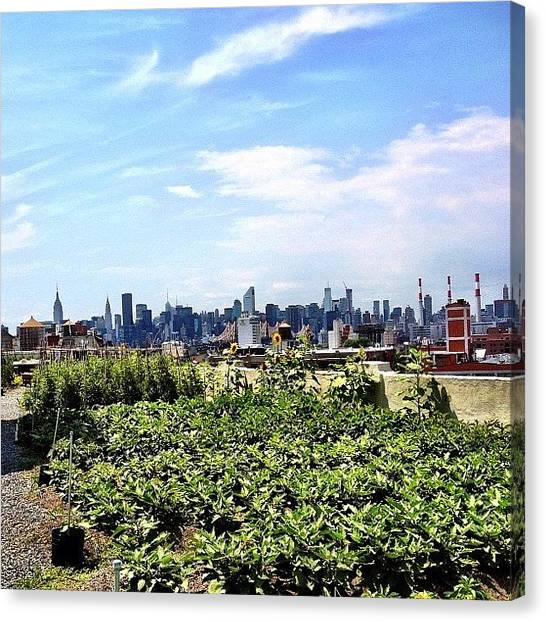 Skylines Canvas Print - Urban Nature - New York City by Vivienne Gucwa