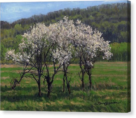 Valley Plum Thicket Canvas Print