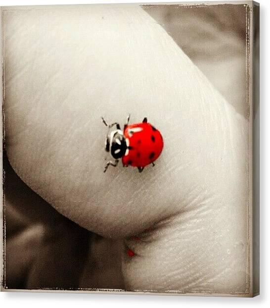 Ladybugs Canvas Print - #vaquita De San Antonio Sobre Mi #dedo by Fer Nando