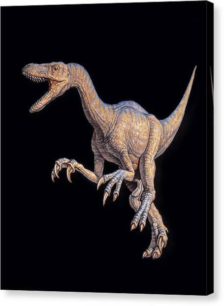 Velociraptor Canvas Print - Velociraptor Dinosaur by Joe Tucciarone